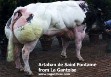 ARTABAN de Saint Fontaine